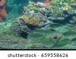 beautiful abyss at the bottom... | Shutterstock . vector #659558626