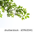 Green Leaf Isolated On White...