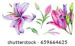 wildflower lily flower in a... | Shutterstock . vector #659664625