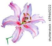 wildflower lily flower in a... | Shutterstock . vector #659665222