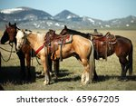 American quarter horses tied up on a ranch in the American west. - stock photo