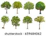 isolated tree on white... | Shutterstock . vector #659684062