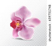orchid flower isolated on... | Shutterstock .eps vector #659751748