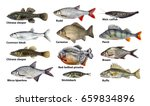 fish isolated set  collection   Shutterstock . vector #659834896