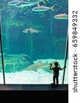 Small photo of Boy admiring shark in aquarium