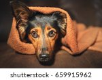 small black and brown dog... | Shutterstock . vector #659915962