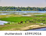 cow on river bank in egypt.... | Shutterstock . vector #659919016