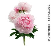 Pink Peony Flower Isolated On...