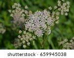 wild flowers | Shutterstock . vector #659945038