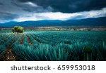agave plantation | Shutterstock . vector #659953018