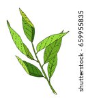hand drawn green leaves tree... | Shutterstock .eps vector #659955835