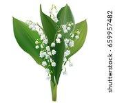 convallaria majalis   lilly of... | Shutterstock .eps vector #659957482