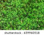 closeup to forest moss... | Shutterstock . vector #659960518