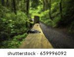Slug On A Wooden Fence Handrai...