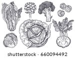 vegetables set. isolated... | Shutterstock . vector #660094492