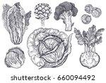 vegetables set. isolated... | Shutterstock . vector #660094492