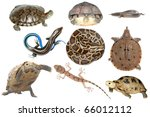 ������, ������: wild animal collection reptile