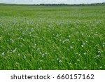 flowering flax field   Shutterstock . vector #660157162