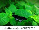 Beautiful Black Butterfly ...