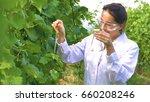 a specialist girl checks the... | Shutterstock . vector #660208246