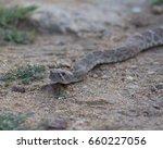 Rattlesnake In Southern...