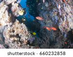 reef passage with colorful soft ... | Shutterstock . vector #660232858