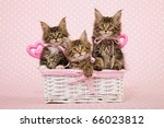 3 Kittens In Basket With Pink...