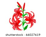 lilies on a white background | Shutterstock . vector #66027619