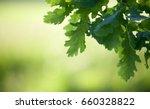 oak tree branch in spring | Shutterstock . vector #660328822