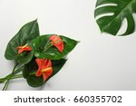 composition with beautiful... | Shutterstock . vector #660355702