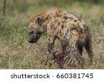 hyena south africa | Shutterstock . vector #660381745