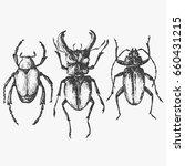 beetle isolated on white ... | Shutterstock .eps vector #660431215
