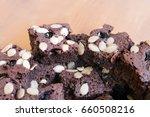 dark chocolate brownie cookies  ...   Shutterstock . vector #660508216