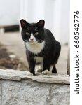 very pretty thuggish cat. black ... | Shutterstock . vector #660542776