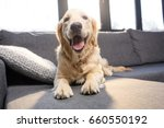 close up view of cute golden... | Shutterstock . vector #660550192