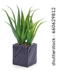 office plant in black pot... | Shutterstock . vector #660629812