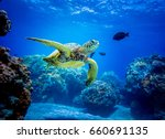 sea turtle | Shutterstock . vector #660691135