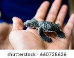Small photo of Holding a hatchling in turtle breeding at Sangalaki Island, East Kalimantan, Indonesia