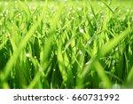 water drops on the green grass...   Shutterstock . vector #660731992