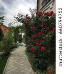 Stock photo the roses in the garden 660794752