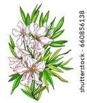 white apricot tropical flower... | Shutterstock . vector #660856138