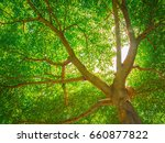 trees | Shutterstock . vector #660877822