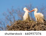 two storks are sitting in the...   Shutterstock . vector #660957376