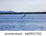 landscape with different birds... | Shutterstock . vector #660991702