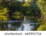 landscape with different birds... | Shutterstock . vector #660991726