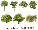isolated tree on white... | Shutterstock . vector #661023436