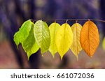 rainbow of autumn | Shutterstock . vector #661072036