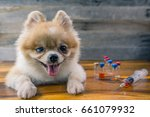 veterinary medicine  pet ... | Shutterstock . vector #661079932