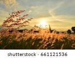 meadow grass flower orange tone ... | Shutterstock . vector #661121536