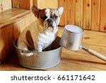 french bulldog in the... | Shutterstock . vector #661171642